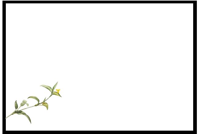Partecipazione con invito e lista nozze botanica